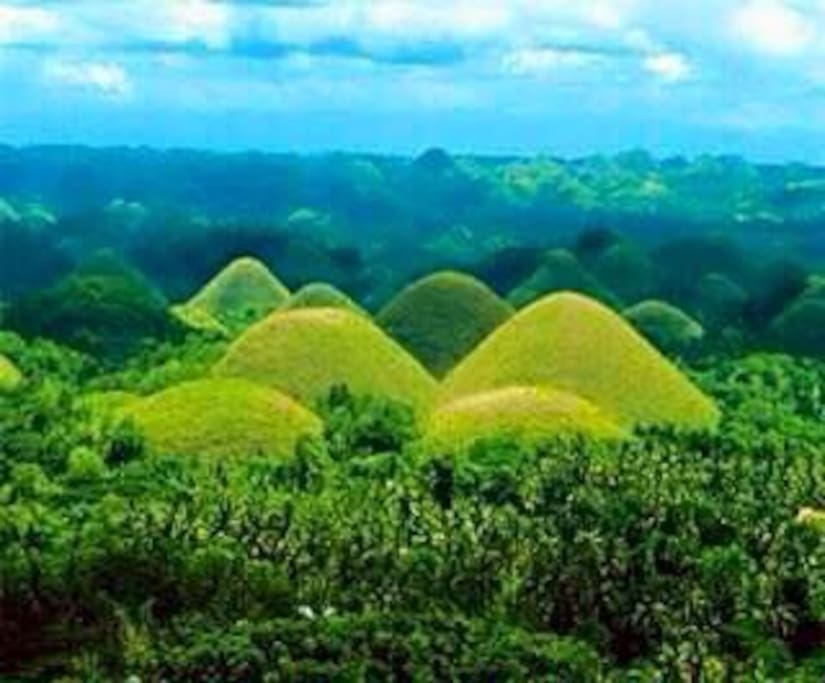 World famous Chocolate Hills