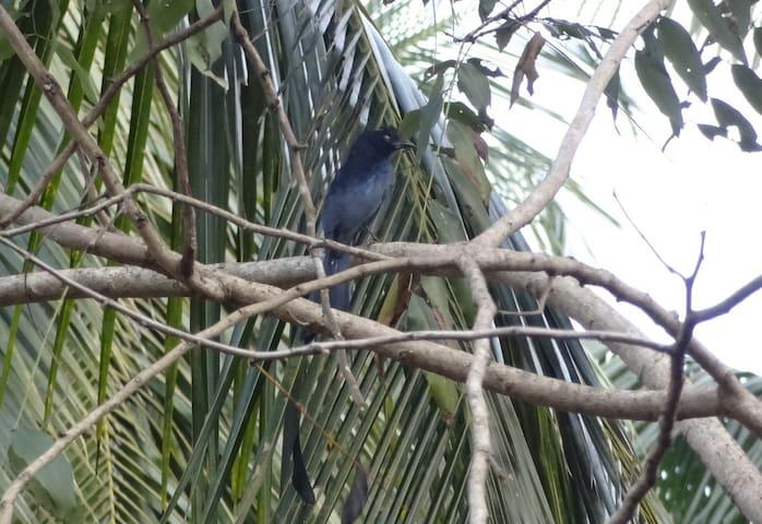 Bird Watching from the Villa.