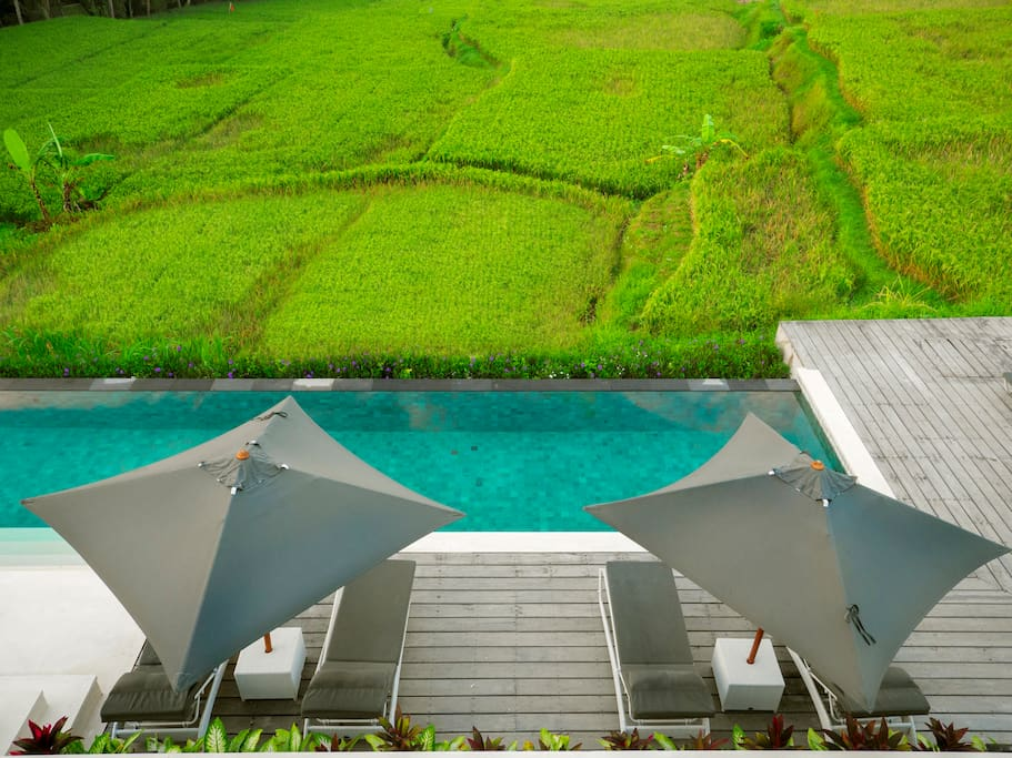 View of the rice fields from our roof top area