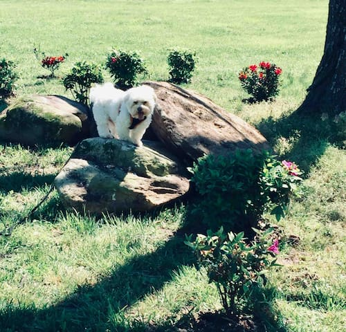 Tuffy at the Park.