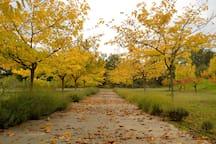 Entrada de la finca en otoño