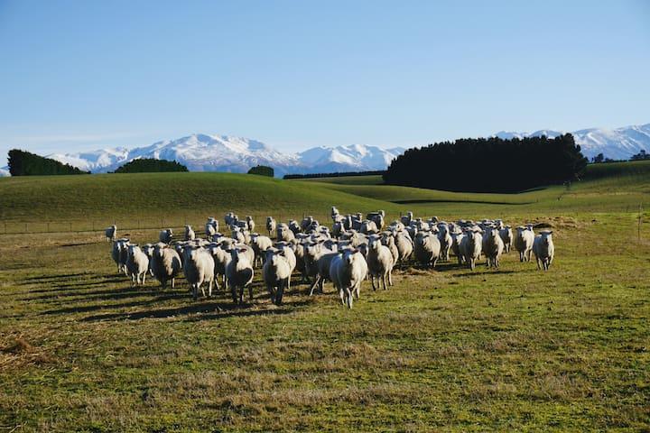 Shear-Vue: includes free: *Farm Tour*Wifi*Hot Tub