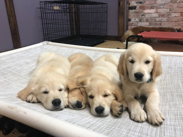 Puppy Palace: Luxurious, spacious, cute & cuddly