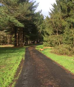 Country Charm on 6.5 acres of wildlife habitat.