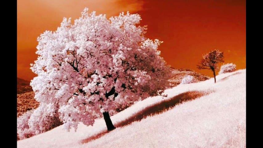 GREAT SAKURA 桜満開  Spacious Stylish Healing Cozy