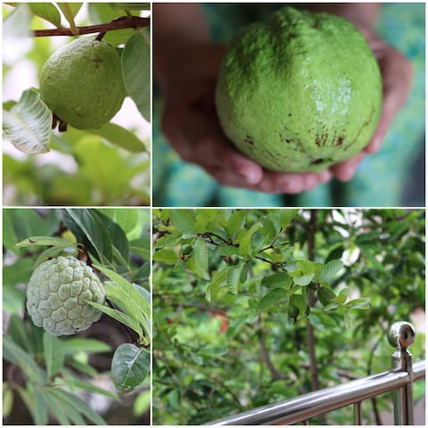 Handpick organic fruits from our little Eden