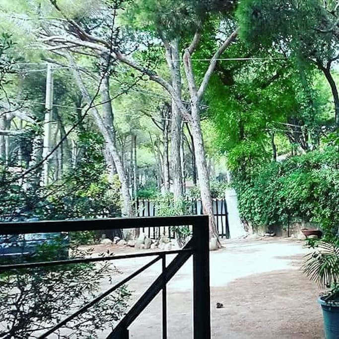 giardino e pineta