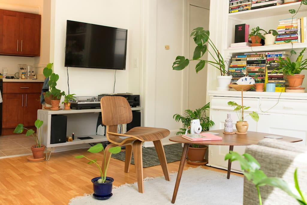 Single studio room with lots of light and plants!