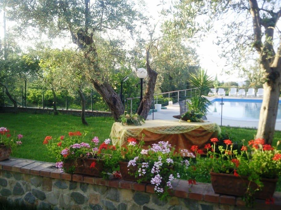 zona garden