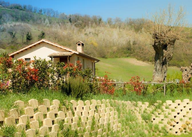Delizioso appartamento con giardino e wi fi