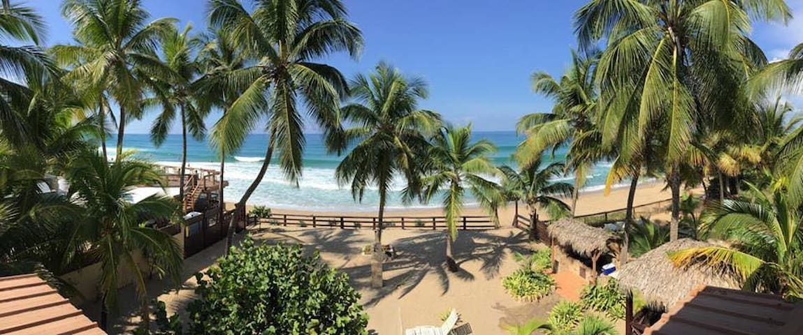 The view from Apt B, coconut palms, gated private courtyard. Watch the endangered humpback whales from your hammock on the patio.