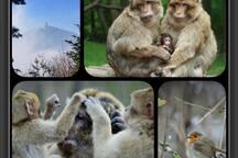 A 7km du gite rouge, un parc naturel vous propose une immersion auprès des macaques. Un lieu ou réellement vous vous êtes chez eux : La montagne des singes.
