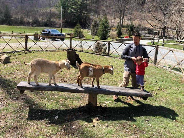 Perfect for 2 Families! Trout stream Petting Zoo!