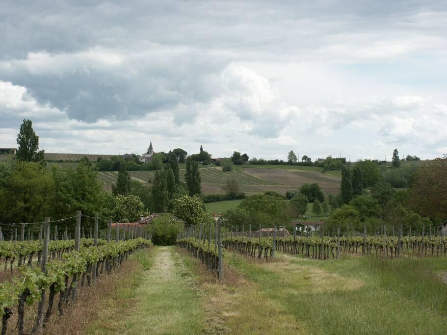 Vue des vignes derrière notre maison