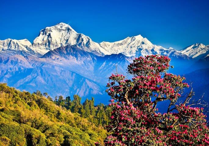 Beautiful View of Mountain