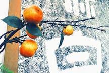 【庐山冇名堂美学民宿】庐山名人登山古道旁·新中式民国风客栈