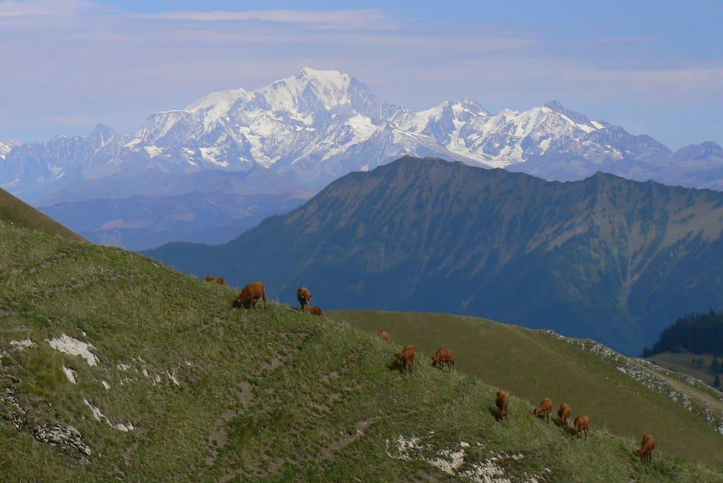En randonnée dans les Bauges, le Mont Blanc n'est jamais loin, comme ici en montant au Trelod. L'Aiguille du Midi est à 2h de route
