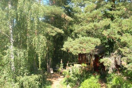En pleine forêt, site atypique