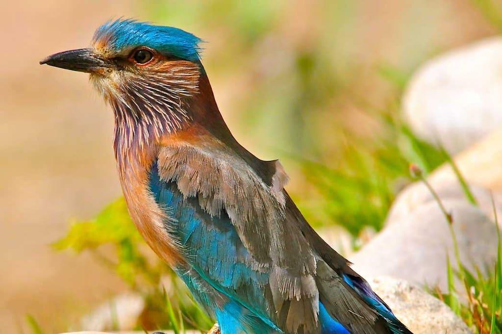 Get Some Amazing Bird Shots