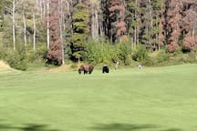 Grizzly Bears protecting golfers on 8th green at JPL