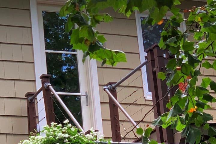 Chesapeake Bird Nest