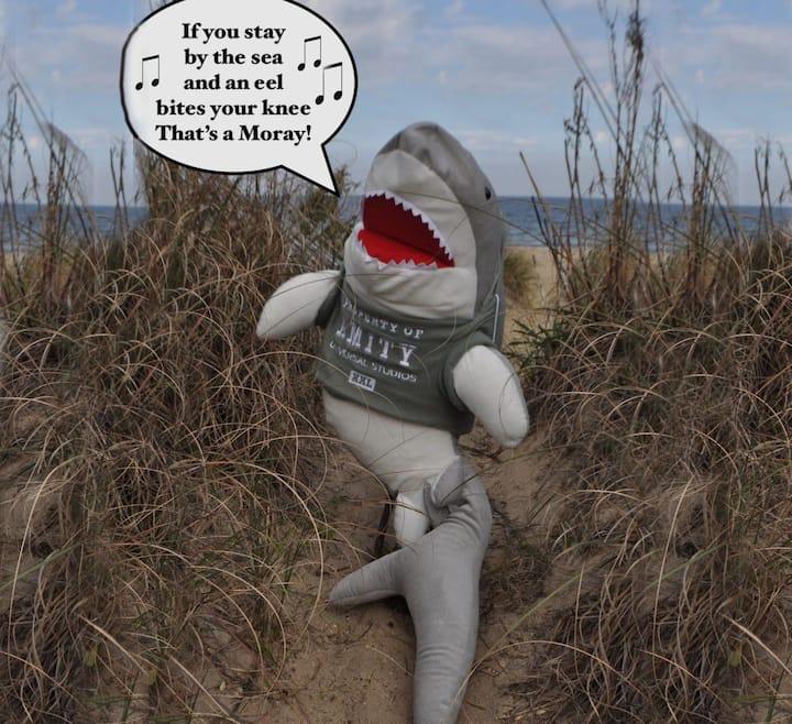 Beachfront- MONTHLY ONLY! Life on a Sandbar!   24A