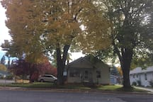 Historic Linden trees dressed in Fall colors. They provide cooling shade and protection on the front porch all year long!