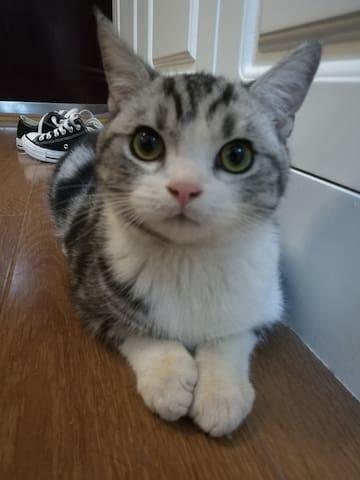 猫子青旅Kitty younth hostel(光谷步行街、德意风情街旁)壁炉女生4人间A床 - Wuhan - Vandrarhem