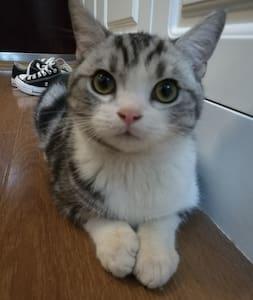 猫子青旅Kitty younth hostel(光谷步行街、德意风情街旁)壁炉女生4人间A床 - Wuhan - Vandrerhjem