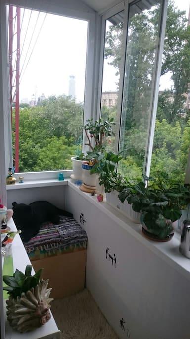 Окна выходят в тихий двор с красивым видом на Дом Музыки