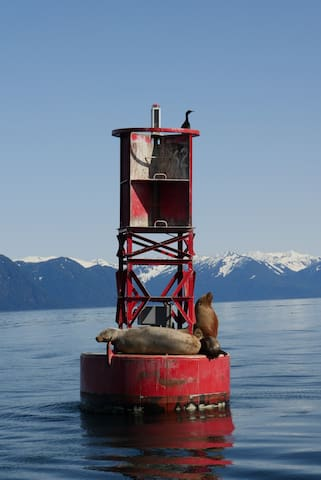 Some of local sea lions