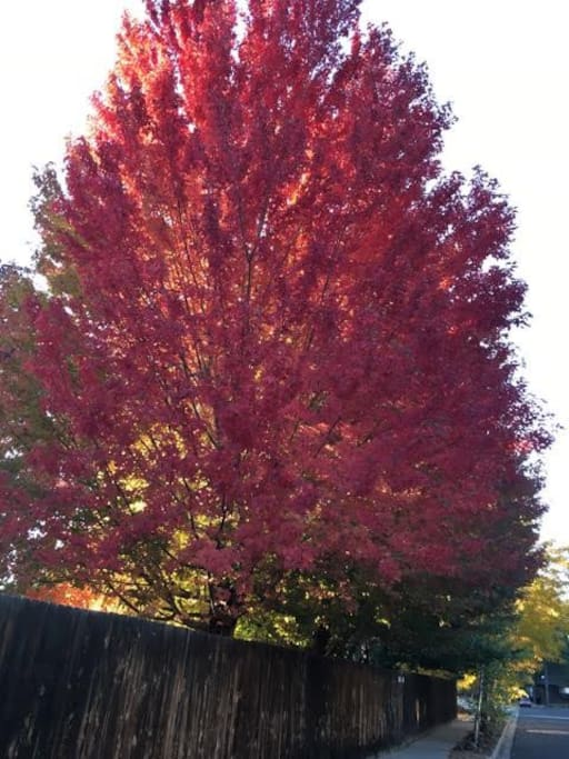 One of the trees in the backyard