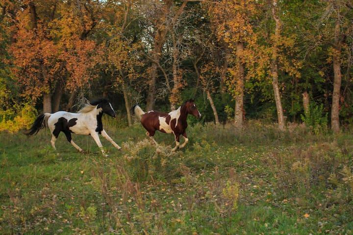 Farm Home on 12 Acres by Big Stone Lake.