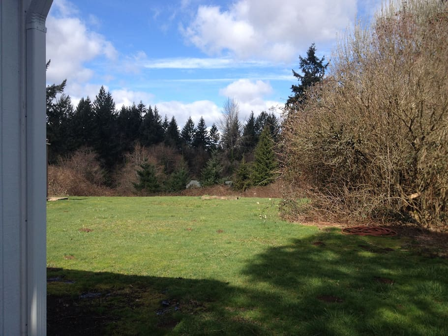 Forested view from the back yard.