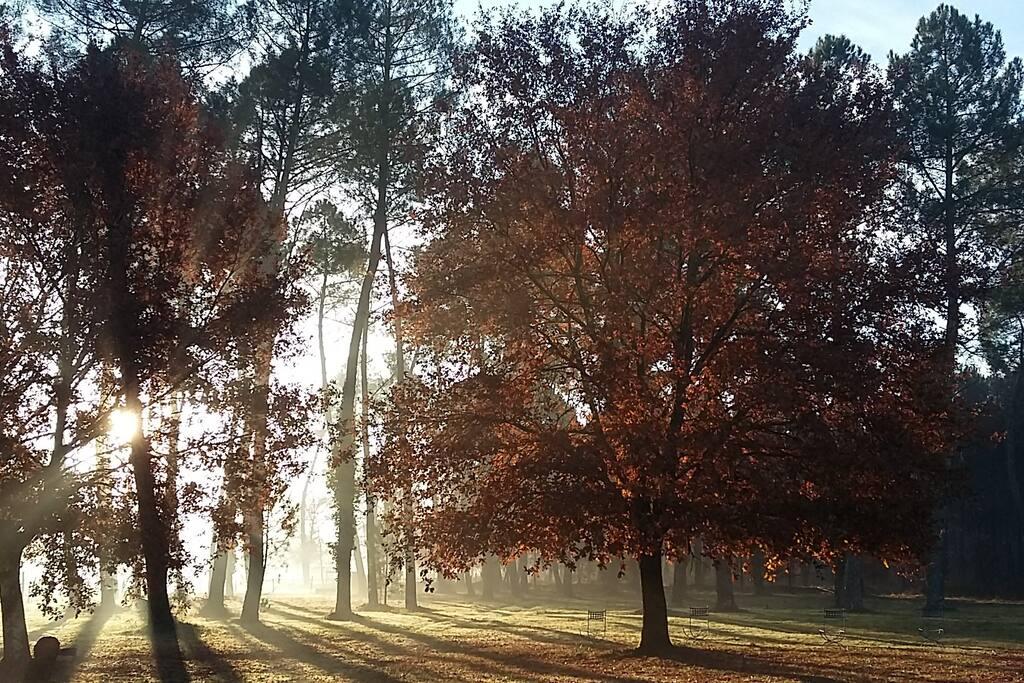 Le parc en automne.