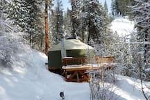 Sly Owl Ranch Yurt