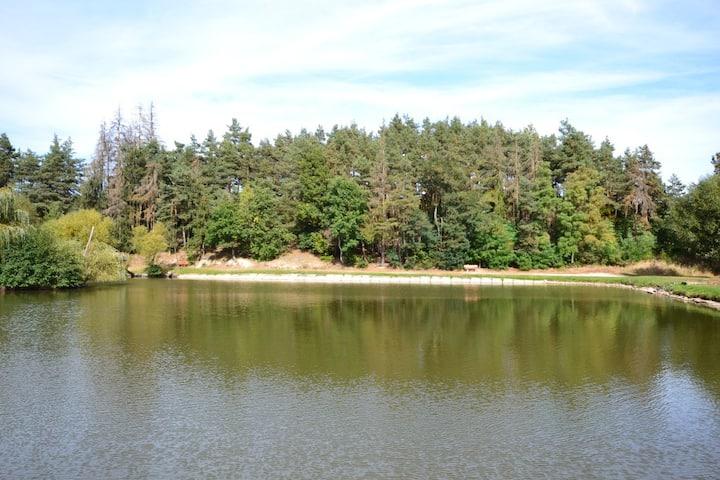 Les u Rybičky (místo u rybníka s vodou na koupání)
