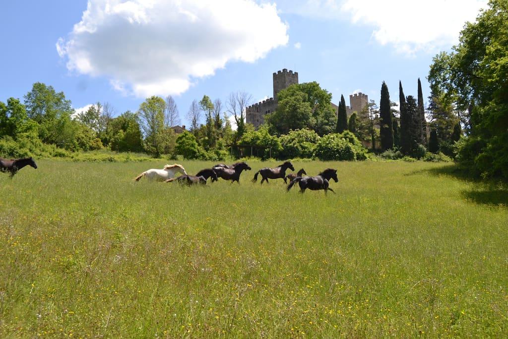 Il nostro allevamento di Andalusi P.R.E.