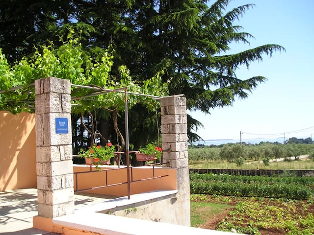 Quiet Apartment with sea view and olive grove