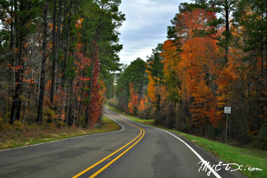 Fall in Deep East Texas !!!
