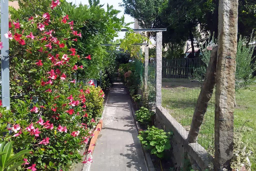 Romantic path in the garden.
