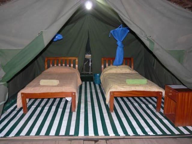 Enchoro Wildlife Camp, Masai Mara , kenya - Narok - Sátor