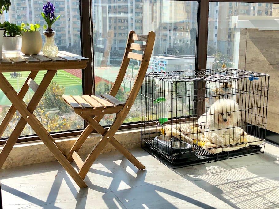 阳台养了只小比熊,怕狗者慎订。