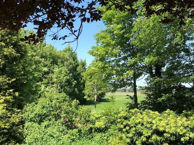 Het uitzicht op weiland en het bos