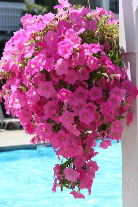 A beautiful flower basket hanging in the pool area.