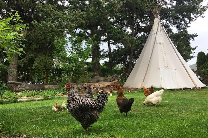 PRIVATE tipi bedroom, eco farm dinner & breakfast