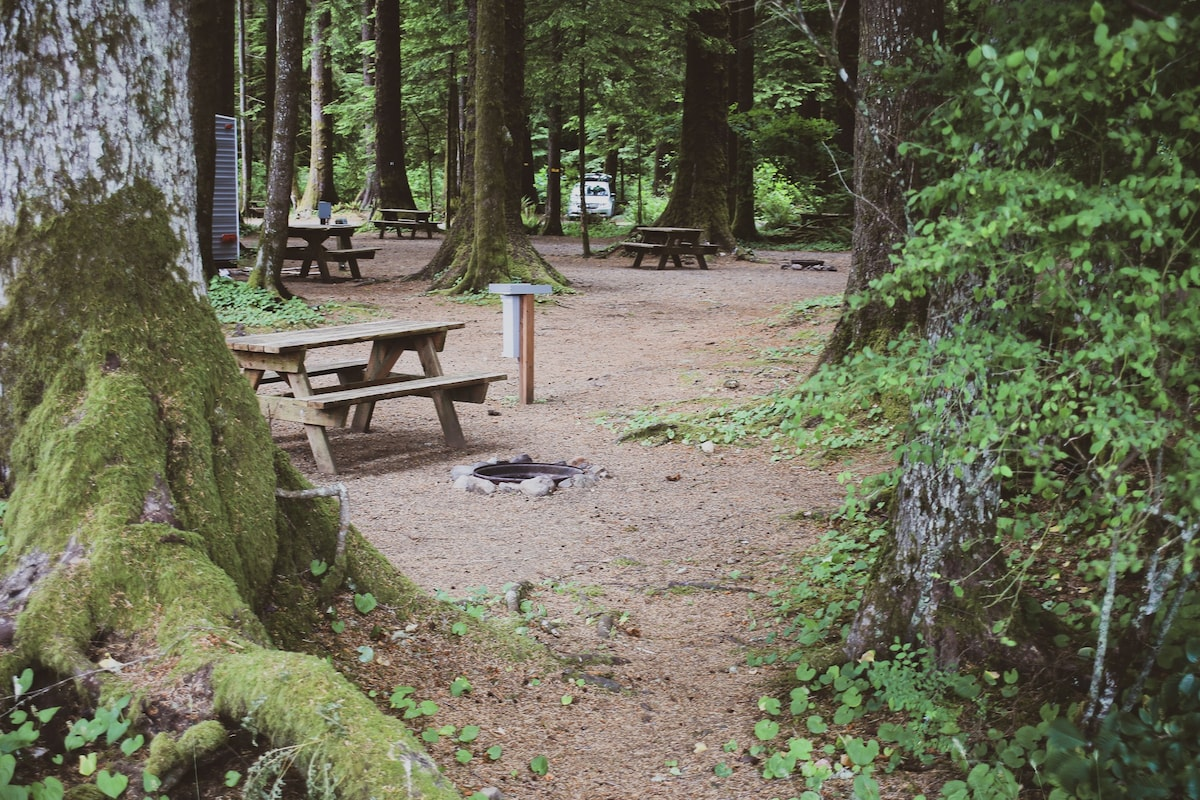 Camping Near Tofino? You'll Love Green