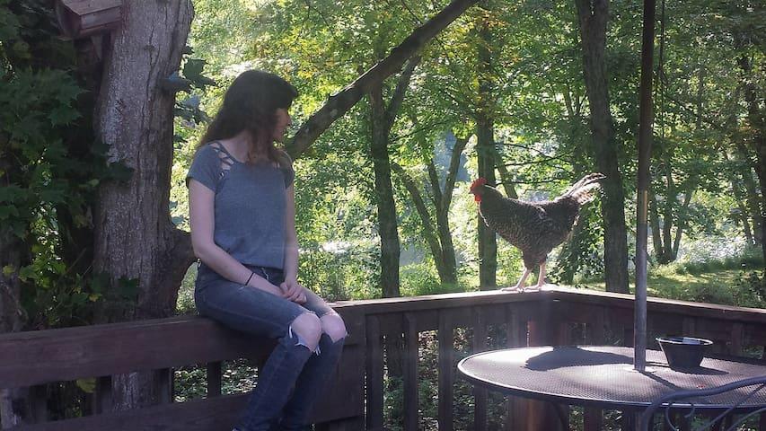 Meet Doc, the friendly neighborhood Rooster.
