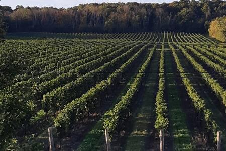 Spectacular Vineyard View.....