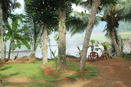 The Mango tree - Hikkaduwa